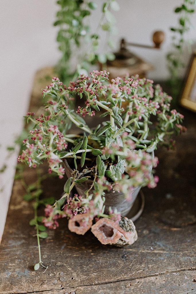 Detailfoto einer Grünpflanze